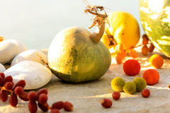 Zucca e frutti autunnali Immagine Stock Libera da Diritti