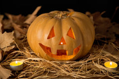 Zucca e Halloween Fotografie Stock