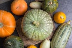 Zucca e zucchini Immagine Stock Libera da Diritti