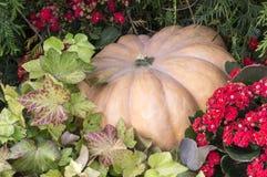 Zucca in fiori al festival del raccolto di autunno fondo, verdure Immagini Stock Libere da Diritti