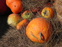 Zucca gialla fotografie stock libere da diritti