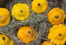 Zucca gialla di Patty Pan visualizzata al mercato dell'agricoltore Cucurbita della zucca Fotografia Stock