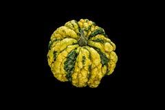 Zucca giallo verde su fondo nero Immagine Stock