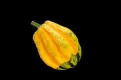 Zucca giallo verde su fondo nero Immagini Stock
