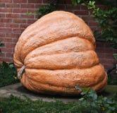 Zucca gigante Fotografia Stock Libera da Diritti