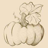 Zucca grumosa di stile d'annata disegnato a mano Immagine Stock