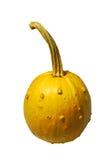 Zucca isolata con il gambo Fotografia Stock Libera da Diritti