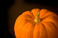 Zucca isolata di Halloween del Virgin Immagine Stock Libera da Diritti