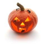 Zucca Jack O'Lantern di Halloween Immagine Stock