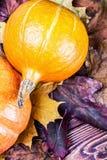 Zucca matura in foglie di acero di autunno Fotografia Stock