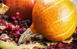 Zucca matura in foglie di acero di autunno Immagine Stock