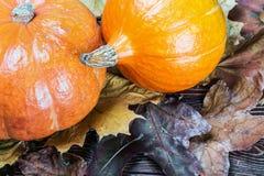 Zucca matura in foglie di acero di autunno Fotografia Stock Libera da Diritti