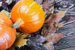 Zucca matura in foglie di acero di autunno Immagini Stock Libere da Diritti