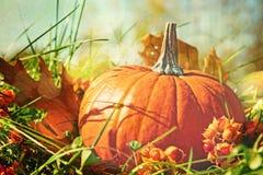Zucca nell'erba con la sensibilità di colore dell'annata fotografia stock