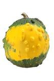 Zucca ornamentale gialla Immagine Stock