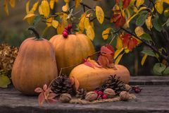 Zucca, zucca Priorità bassa felice di giorno di ringraziamento Autumn Thanksgiving Pumpkins sopra fondo di legno, natura morta Be Immagine Stock