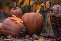 Zucca, zucca Priorità bassa felice di giorno di ringraziamento Autumn Thanksgiving Pumpkins sopra fondo di legno, natura morta Be Fotografie Stock Libere da Diritti