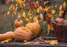 Zucca, zucca Priorità bassa felice di giorno di ringraziamento Autumn Thanksgiving Pumpkins sopra fondo di legno, natura morta Be Fotografia Stock