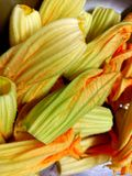 Zucca - pumpkin flowers for cooking. Zucca or pumpkin flowers cleaned for cooking stock photo