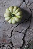 Zucca sul pavimento del cemento Immagine Stock