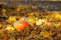Zucca sulle foglie di autunno gialle Fotografia Stock Libera da Diritti