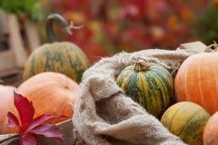 Zucca in una borsa di tela Concetto della natura di autunno Fotografia Stock Libera da Diritti
