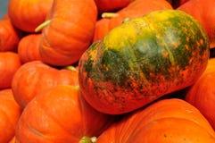 Zucca verde Fotografia Stock Libera da Diritti