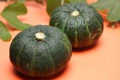 Zucca verde fotografia stock