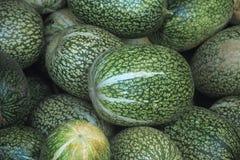 Zucca verde Immagine Stock Libera da Diritti