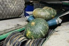 Zucca verde sul nastro trasportatore Immagine Stock