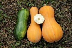 Zucca, zucchini - verdure del giardino fotografia stock