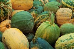 Zucche Fotografia Stock Libera da Diritti