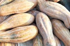 Zucche Fotografie Stock Libere da Diritti