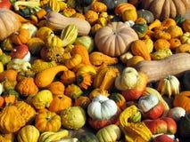 Zucche al mercato Fotografia Stock Libera da Diritti