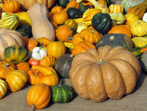 Zucche al mercato Fotografie Stock