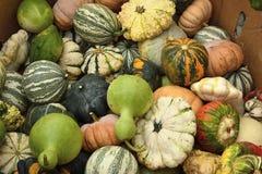 Zucche al mercato di Halloween Fotografie Stock Libere da Diritti