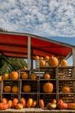 Zucche arancio da vendere su un mercato immagini stock