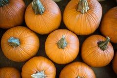 Zucche arancio di caduta immagine stock libera da diritti