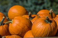 Zucche arancio di Halloween su esposizione Fotografia Stock
