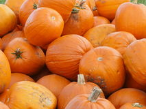 Zucche arancio di Helloween all'aperto Immagine Stock