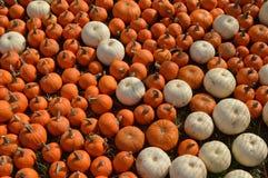 Zucche arancio e bianche Fotografie Stock