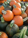 Zucche arancio e verdi raccolte e su esposizione da vendere fotografia stock libera da diritti