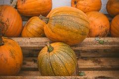 Zucche arancio impilate su uno scaffale di legno Immagini Stock Libere da Diritti