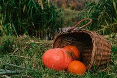 zucche arancio in un canestro di legno di vimini sulla sponda del fiume Halloween fotografie stock libere da diritti