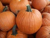 Zucche arancioni Fotografia Stock Libera da Diritti