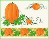 Zucche arancioni. Fotografia Stock