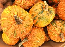 Zucche arancioni Fotografie Stock Libere da Diritti