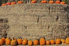 Zucche Assorted di ringraziamento su fieno Immagine Stock Libera da Diritti
