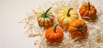Zucche, Autumn Thanksgiving e fondo variopinti differenti di Halloween immagine stock libera da diritti