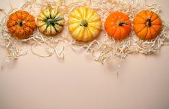 Zucche, Autumn Thanksgiving e fondo variopinti differenti di Halloween immagine stock